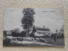 Cpa Renaix Ronse Environ Moutons Berger 1921 - Ronse