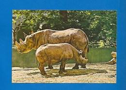 ANIMAUX - RHINOCÉROS - ADULTE ET PETIT - Rhinocéros
