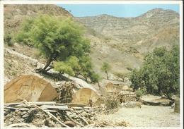 Sur La Route De Bankuale - Photo : V. Carton - Djibouti