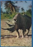 ANIMAUX - RHINOCÉROS - FAUNE AFRICAINE - AFRICAN FAUNA - Rhinocéros