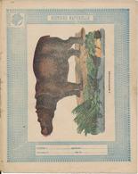 Couverture De Cahier - Histoire Naturelle, L'Hippopotame - Schuehmacher - Protège-cahiers