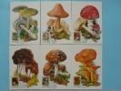 Carte Maximum Card (x6) Champignons Mushrrom Hongrie Hungary Ref 72449 - Champignons