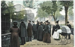 Lyon -  Parc De La Tête D'Or - Les Perrosquets, 1907 - Autres