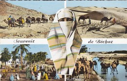 Bechar, Caravanne, Dunes De Sable, Le Marché, Chameaux Se Désalterant (pk56217) - Bechar (Colomb Béchar)