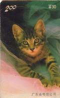 TARJETA TELEFONICA DE CHINA (FAUNA - GATOS), CAT 2/3. P0208(3-2). (244) REVERSO RAYADO - Gatos