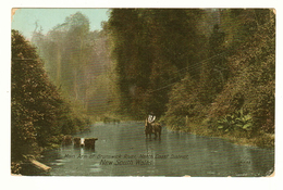 Australia, NSW, North Coast, Northern Rivers, Main Arm Brunswick River, Farmer & Cattle, Printed Postcard - Northern Rivers