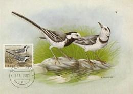 Carte Maximum - Oiseaux - Mariuerla - Islande Reykjavik 1987 - Oiseaux