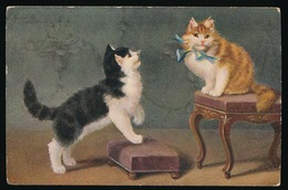 KAT ,KATTEN , CHAT , CHATS , CAT , CATS - Chats