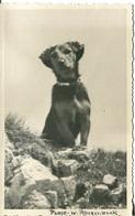 005958  Sitzender Dackel - Hunde