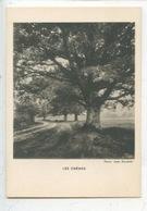 Les Chênes - Photo Jean Roubier (collection Images Du Beau Bourrelier) Cp Vierge - Chêne - Arbres
