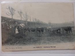 Les Andelys, Vaches Au Pâturage. - Les Andelys