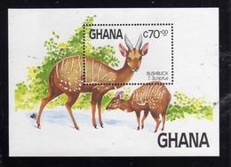 GHANA  1984 WILD FAUNA NATURE ANIMALS ANIMALI BUSHBUCK BLOCK SHEET BLOCCO FOGLIETTO BLOC FEUILLET MNH - Ghana (1957-...)