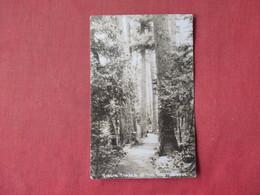 RPPC Virgin Timber Of The   Northwoods   Ref 3162 - Arbres