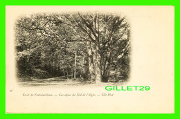 FONTAINEBLEAU (77) - FORÊT DE FONTAINEBLEAU - CARREFOUR DU NID DE L'AIGLE - ND PHOT. - DOS NON DIVISÉ - - Fontainebleau
