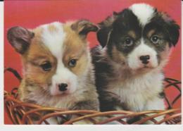 Postcard - What A Basket Of Joy, Card No..f033201l - Unused Very Good - Postcards