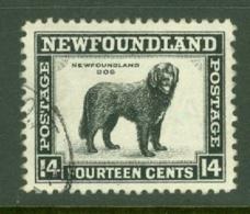 Newfoundland: 1941/44   Pictorial  SG284   14c   [Perf: 12½]   Used - Newfoundland