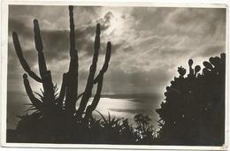 W1124 Monaco - Les Jardins Exotiques - Sunset Coucher Tramonto / Viaggiata 1937 - Giardino Esotico