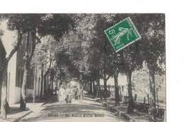 /algerie Bouira Rue Wolff Et Moulins Bertolli - Argelia