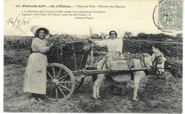 Ile D'Oléron - Récolte Des Oignons, 1906 - Ile D'Oléron