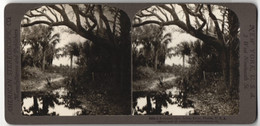 Stereo-Fotografie American Stereoscopic Co., New York, Ansicht Indian River, Florida - Stereo-Photographie