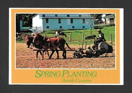 PENNSYLVANIA - AMISH COUNTRY - SPRING PLANTING TOBACCO PLANTING - Other