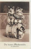 AK 0161  Musizierende Katzen - Glückwunschkarte Um 1938 - Katzen