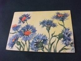 FIORI FIORDALISO ILLUSTRATORE VEDI SIGLA MB - Flowers