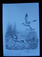 DESSIN AU CRAYON SÉPIA FORMAT A 4 - 1985-.. Birds (Buzin)