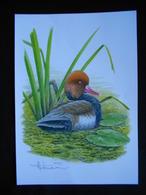 DESSIN  COULEUR  FORMAT A 4 - 1985-.. Birds (Buzin)