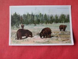 Bear At Upper Geyser Basin  Yellowstone Park   Ref 3163 - Bears