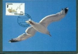CM-Carte Maximum Card # 1986-Gibraltar # Europa  CEPT # Protection Nature Et Environnement #Mouette, Silbermöwe,gull, - Europa-CEPT