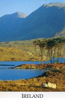 Lot De 15 Carte D'Irlande , Ireland -Dingle - Kerry - Connemara - 5 - 99 Cartes