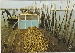 D814 OSTREICULTURE - BASSIN D'ARCACHON - UNE PINASSE CHARGEE D'HUITRES - Pesca