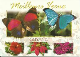 CARTE POSTALE - GUYANE - La Faune - Papillons - Agrias Sahlkei / Morpho Ménélaus - Editions GRAND SUD - Papillons