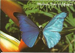 CARTE POSTALE PORTEFEUILLE - GUYANE - Papillons - Morpho Rhéténor - Editions G. DELABERGERIE - Papillons