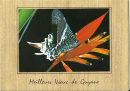 CARTE POSTALE PORTEFEUILLE - GUYANE - Papillons - Yrania Leilas - Editions G. DELABERGERIE - Papillons