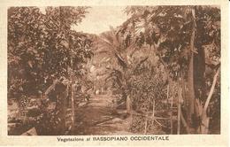"""2620 """" VEGETAZIONE AL BASSOPIANO OCCIDENTALE """" CART. POST.  ORIG.  NON SPED. - Eritrea"""