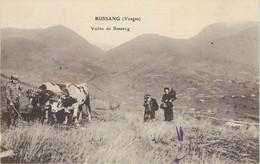 CPA 88 Vosges Vallée De Bussang Paysans Attelage Boeufs - Bussang