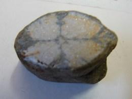 Jo. 8. Fragment De Fossile Ou De Minéraux à Déterminer - Minéraux