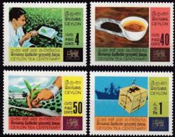 Sri Lanca, Ceylon, 1967, 359/62, 100 Jahre Teeanbau Auf Ceylon. MNH ** - Sri Lanka (Ceylon) (1948-...)