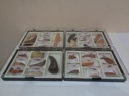 Colección De 27 Replicas De Garras Y Dientes Fósiles De Dinosaurios En 4 Estuches. Marca Geofin-Italy. - Fósiles