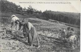 Chauffailles - Recolte Des Pommes De Terre - France