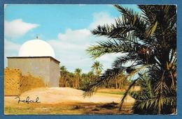 BISKRA LA PALMERAIE 1977 - Biskra
