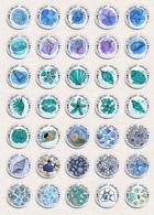 35 X Seashells Sea Shells ART BADGE BUTTON PIN SET 1 (1inch/25mm Diameter) - Animaux