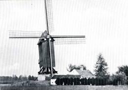ZINGEM (O.Vl.) - Molen/moulin/mill - Zwart-wit Kaart Van Meuleken 't Dal Na De Restauratie Van 1968 - Zingem