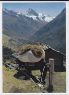 Val D'Hérens, Evolène. Fenaison, Mulet. Heuernte, Muli - VS Valais