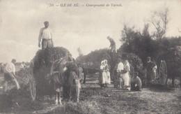 ILE DE RE : Chargement Du Varech - Ile De Ré