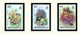 Montserrat 432-34 MNH 1980 Marine Life - Montserrat