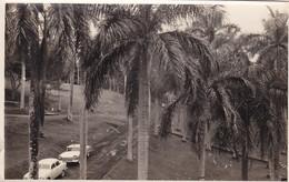 PANAMA. ZONA LINDERA CON EL CANAL, CIRCA 1940s PAYSAGE LANDSCAPE PHOTOS ORIGINAL SIZE 13x8cm - BLEUP - Lieux