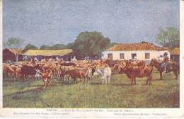 BRASIL Brazil Brésil - PORTO ALEGRE ( Rio Grande Du Sul ) Elevage Du Bétail - CPA Colorisée - Porto Alegre